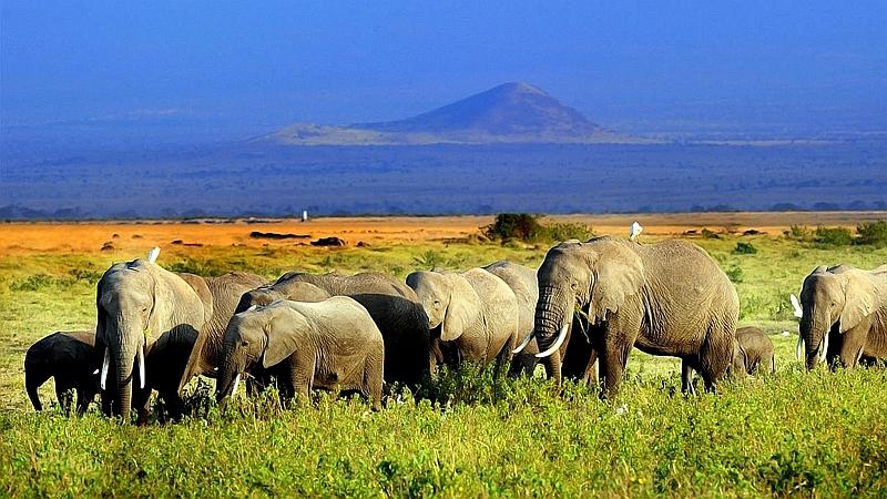 Elefanti nel Parco Amboseli