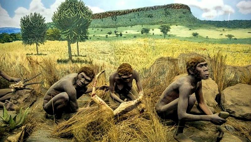 Homo Erectus. Museo Nazionale Nairobi