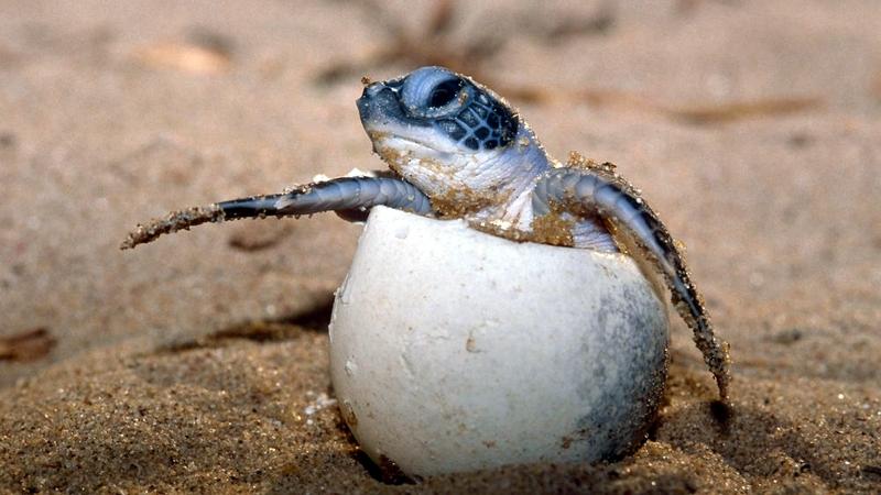 Tartaruga al Lamu Marine Conservation
