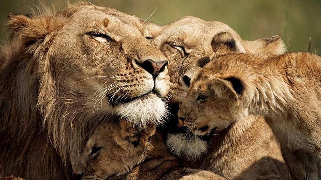 Leoni-Unione familiare - Kenya