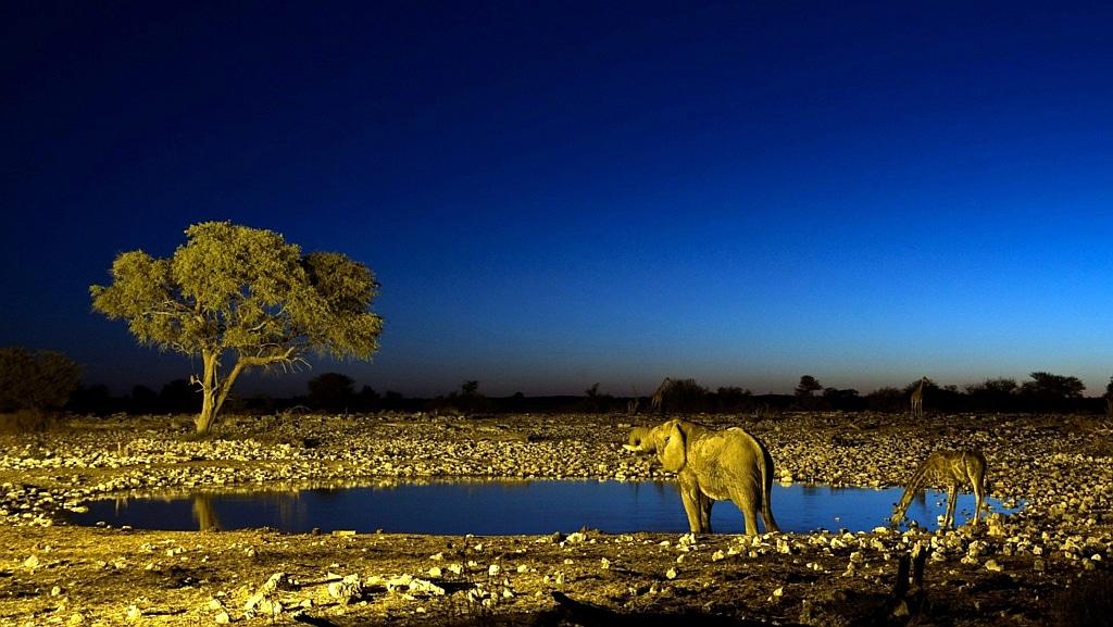 Panoramica notturna savana - Kenya