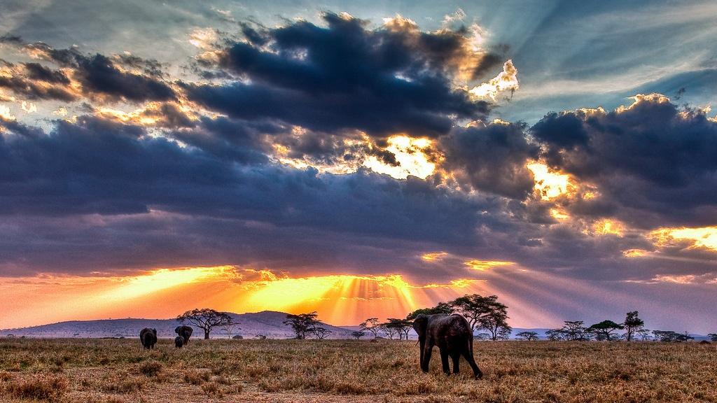 Serengeti-Tramonto nella savana