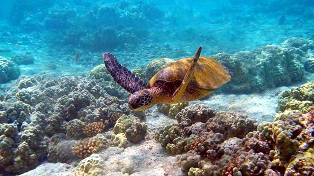 Tartaruga marina - Kenya
