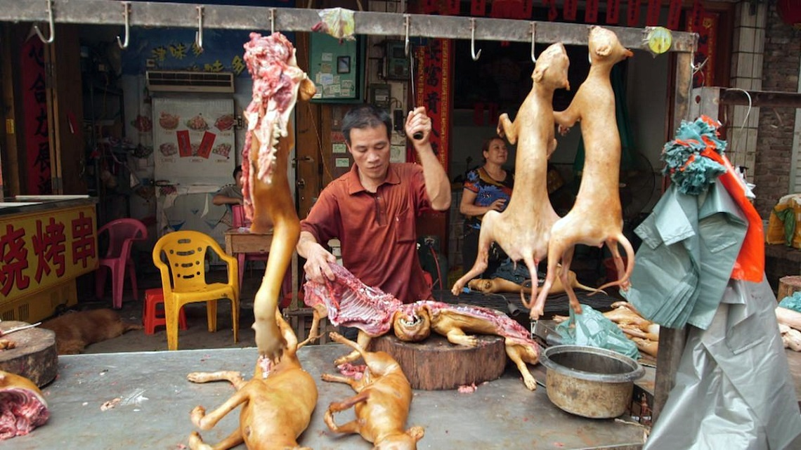 Human flesh or animals?