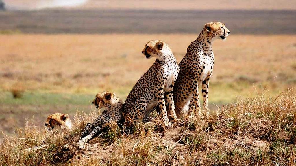 Serengeti Reserve