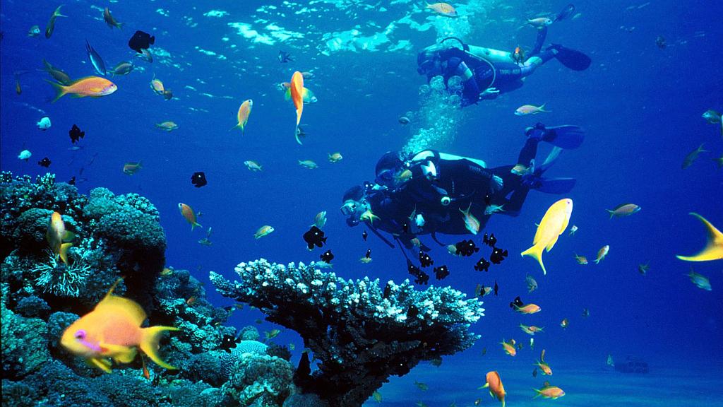 Kenya Diving