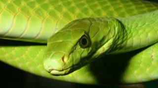 Bio-Ken Snake Farm Watamu Kenya