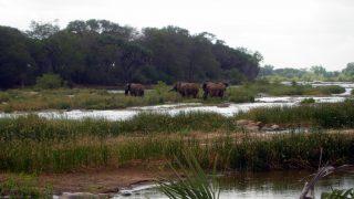Elefanti Parco Nazionale Tsavo Est-Kenya Safari