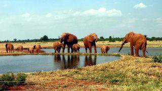 Parco Nazionale Tsavo Est-Kenya
