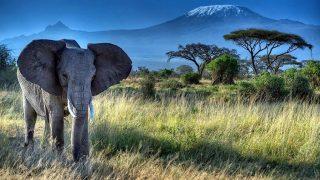 Vista monte Kilimanjaro Parco Nazionale Amboseli-Kenya