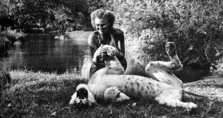 The story of the lioness Elsa